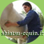 Shiatsu equin